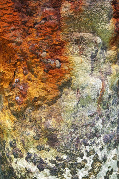 Photograph - Detail Of A Rusted Dock Pier II by David Letts