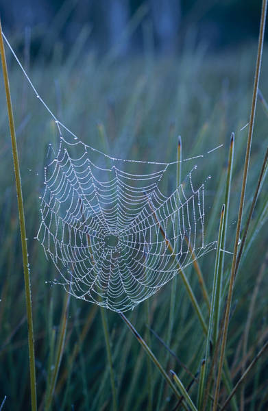 Trapeze Photograph - Dew Drops Cling To A Spider Web by Jason Edwards