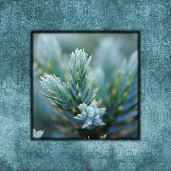 Photograph - Dew On The Pine I Photo Square by Jai Johnson