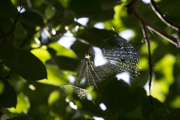 Wall Art - Photograph - Diamond Web by Douglas Barnard