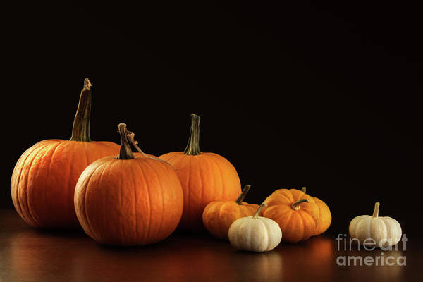 Wall Art - Photograph - Different Sized Pumpkins And Gourds On Dark  by Sandra Cunningham