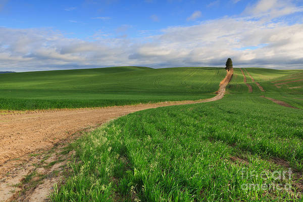 Photograph - Dirt Roads by Beve Brown-Clark Photography