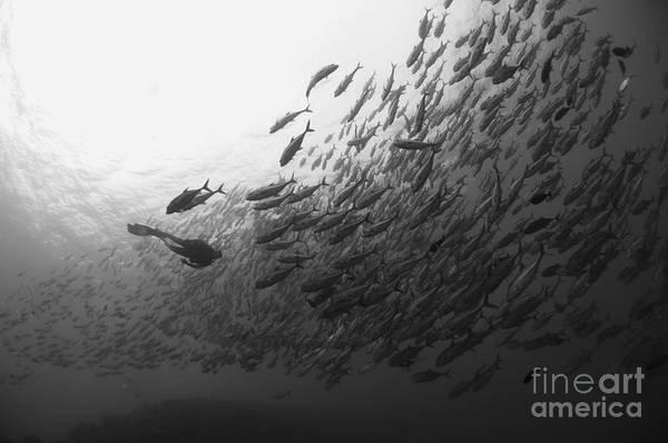 Photograph - Diver Approaching A Large School by Steve Jones