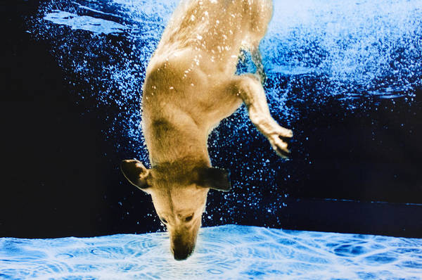 Photograph - Diving Dog 3 by Jill Reger