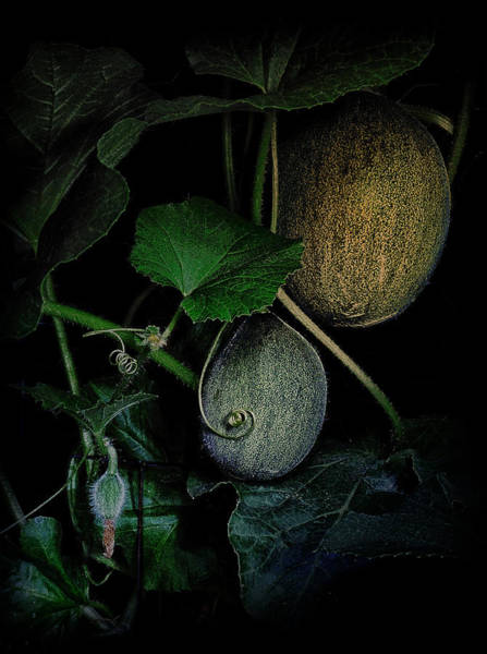 Photograph - Do The Melons Still Grow In The Pale Moonlight by Mark Fuller