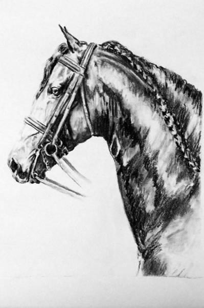 Friesian Drawing - Doaitsen by Jennifer  Vanderploeg