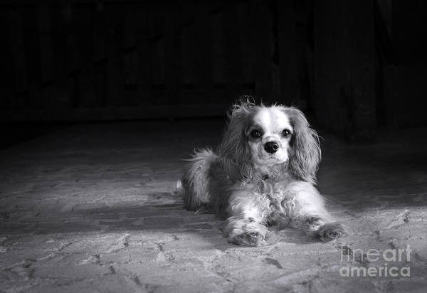 Sweet Puppy Photograph - Dog Black And White by Jane Rix
