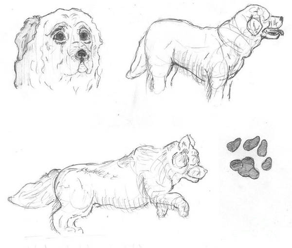 Furry Drawing - Dog Sketches  by Caitlin  Wells