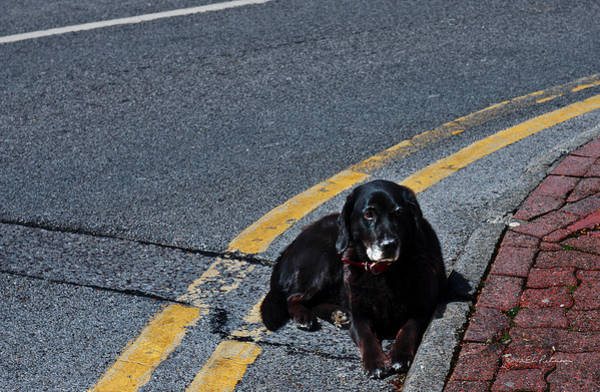 Photograph - Dog Tired by Edward Peterson