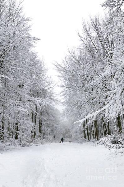 Dog Walker Photograph - Dog Walk In The Snow by Richard Thomas
