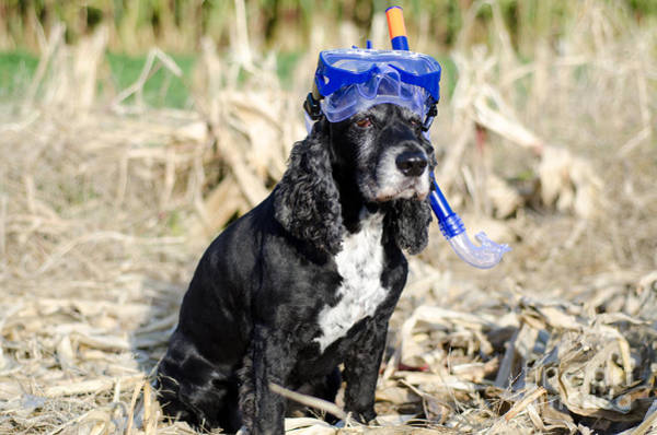 Cocker Spaniel Photograph - Dog With Diving Mask by Mats Silvan