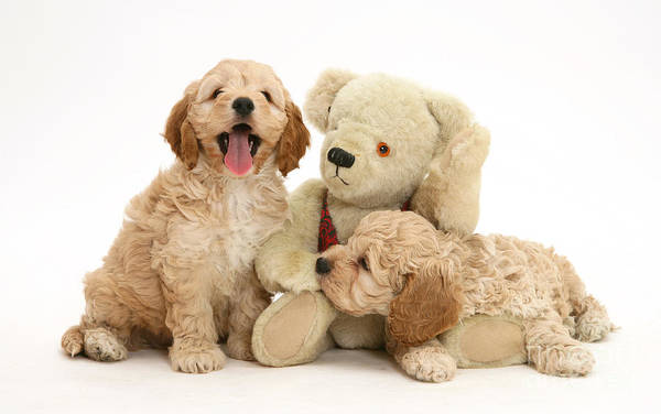 Wall Art - Photograph - Dogs With Stuffed Bear by Jane Burton