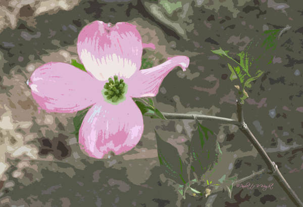 Photograph - Dogwood Blossom by Paulette B Wright
