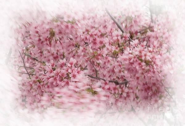 Botanica Photograph - Dogwood In Motion by Fred Lassmann