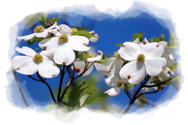 Photograph - Dogwood Tree by Donna Bentley