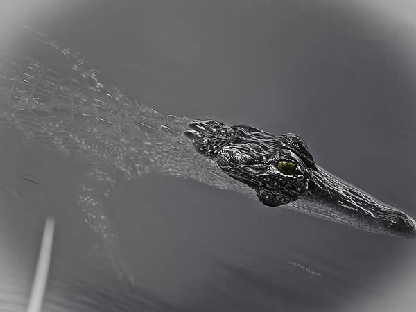 Lurking Photograph - Doin The Gator Paddle by DigiArt Diaries by Vicky B Fuller