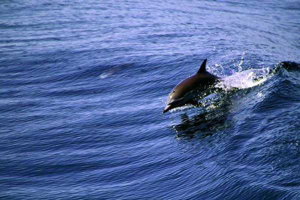 Photograph - Surfrider by Cliff Wassmann