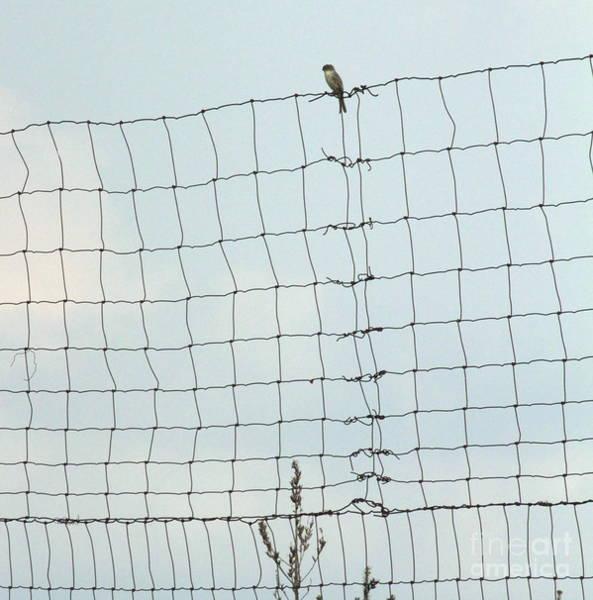 Wire Wrap Photograph - Domain by Joe Pratt