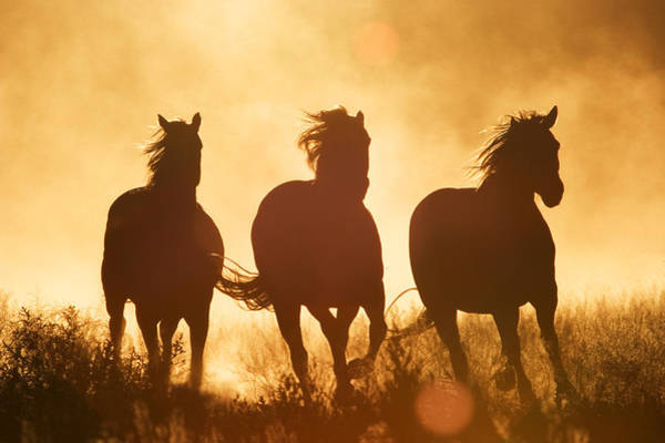 Photograph - Domestic Horse Equus Caballus Trio by Konrad Wothe