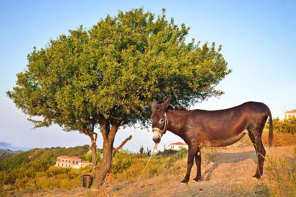 Beasts Photograph - Donkey by Tom Gowanlock