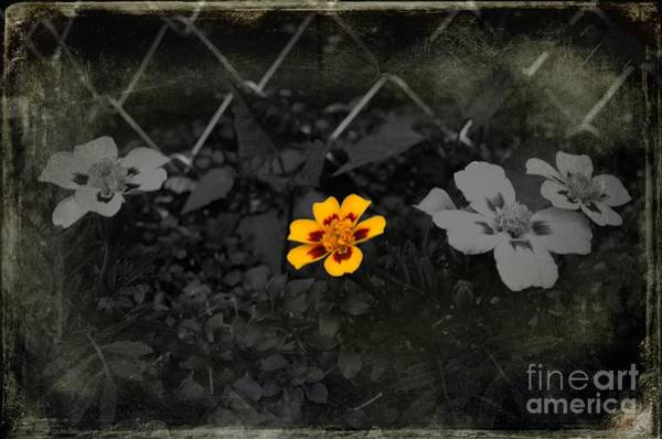 Wall Art - Photograph - Don't Fence Me In by The Stone Age