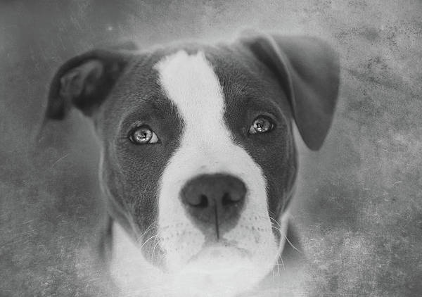 Wall Art - Photograph - Don't Hate The Breed - Black And White by Larry Marshall