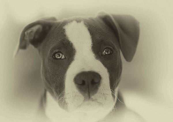 Wall Art - Photograph - Don't Hate The Breed by Larry Marshall