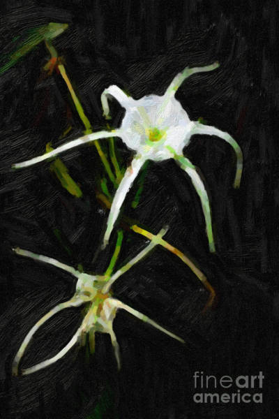 Regal Digital Art - Double Spider Lily Painting by M K Miller