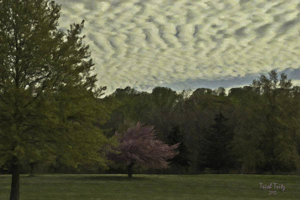 Photograph - Douglassville Delight by Trish Tritz