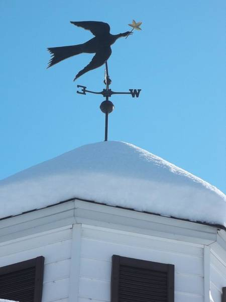 Photograph - Dove Weather Vane by Anne Cameron Cutri