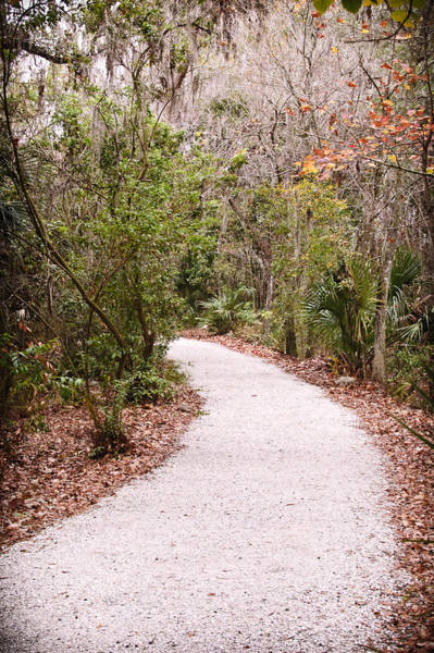 Photograph - Down The Path by Carolyn Marshall
