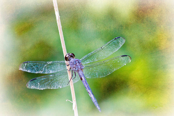 Photograph - Dragonfly Respite 001 by Barry Jones