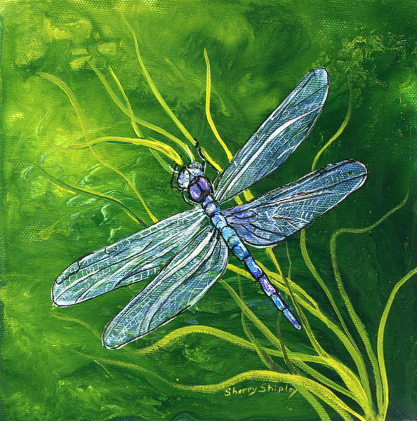 Painting - Dragonfly by Sherry Shipley