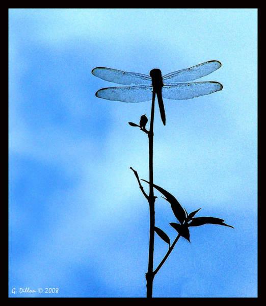 Digital Art - Dragonfly Silhouette by Grace Dillon