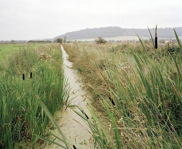 Bulrush Wall Art - Photograph - Drainage Channel by Michael Marten