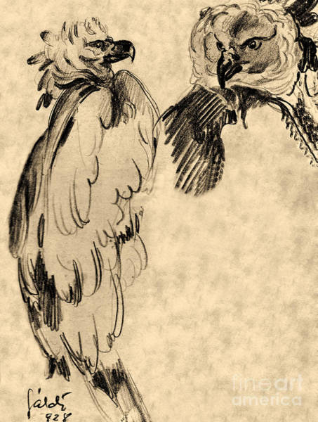 Carnivorous Drawing - Drawing Of Two Eagles by Odon Czintos