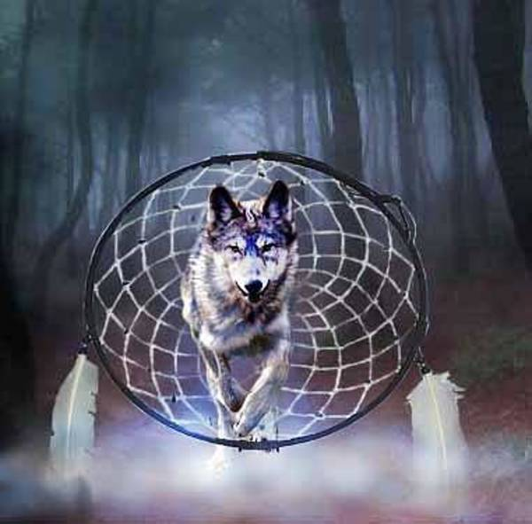 Wall Art - Digital Art - Dream Wolf by Diana Shively