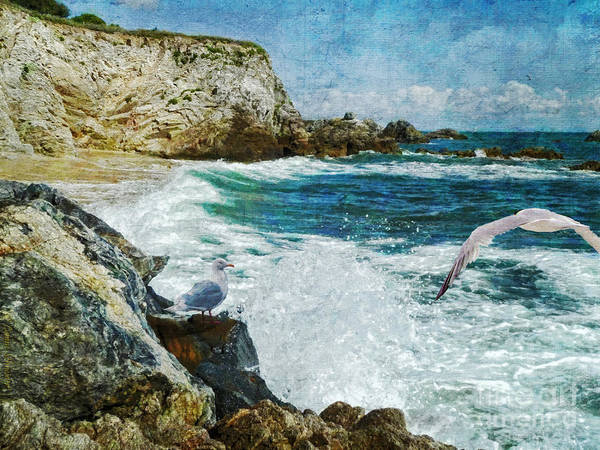 Seagull Digital Art - Dreamer Dream No More by Lianne Schneider