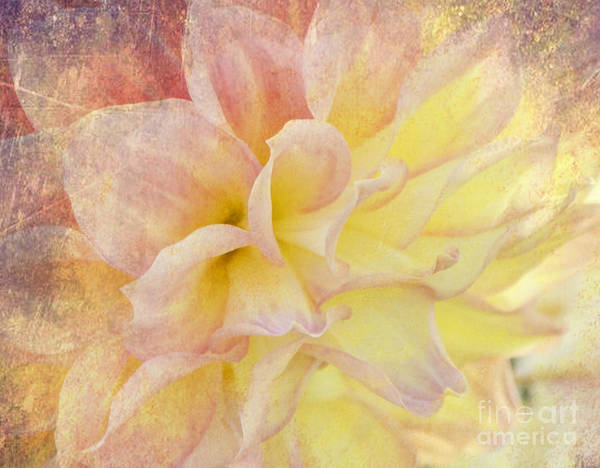 Photograph - Dreamers by Traci Cottingham