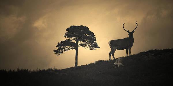 Photograph - Dreaming Of Tomorrow by Gavin Macrae