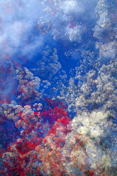 Wall Art - Photograph - Dreamy Floral Sky by David Smith