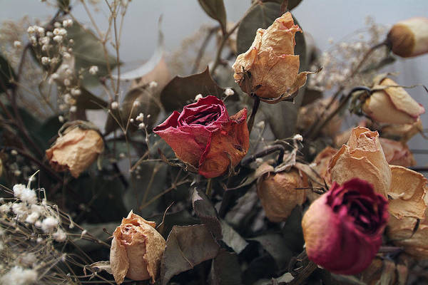 Photograph - Dried Roses by Dragan Kudjerski