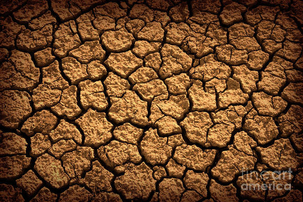 Arid Climate Wall Art - Photograph - Dried Terrain by Carlos Caetano