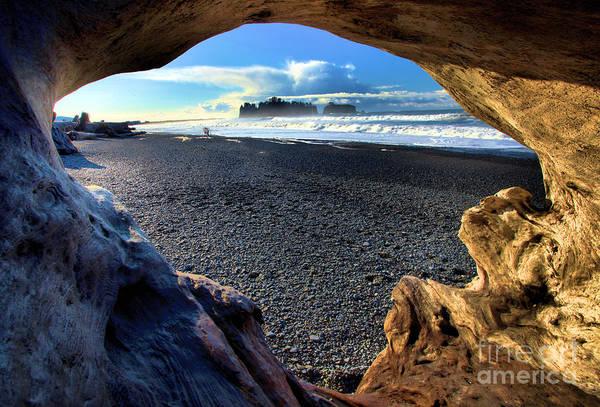 Photograph - Drift Wood Island by Adam Jewell
