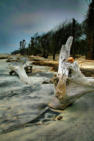 Wall Art - Photograph - Driftwood And Beach by Steven Ainsworth