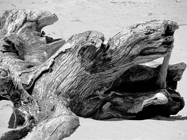 Photograph - Driftwood Dragon by Beth Akerman