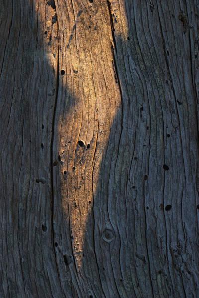 Photograph - Driftwood Light Play by David Kleinsasser