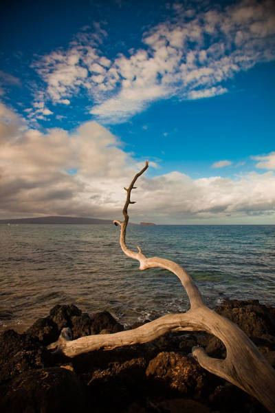 Wall Art - Photograph - Driftwood by Patrick  Flynn