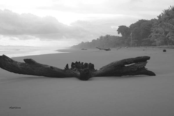 Photograph - Driftwood Playa Hermosa Pacific Coast Costa Rica by Michelle Constantine