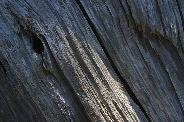 Photograph - Driftwood Ridges 3 by David Kleinsasser